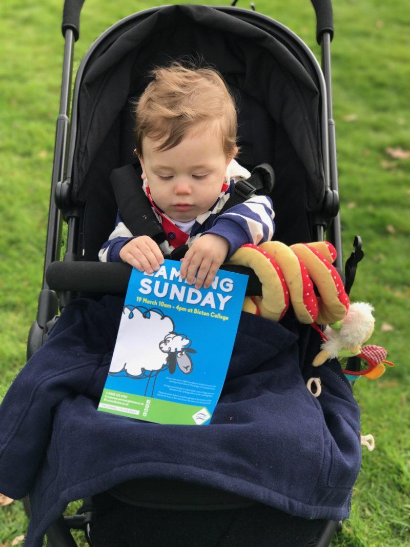 Lambing Sunday at Bicton Park