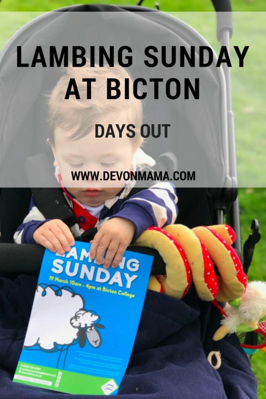Lambing Sunday at Bicton College
