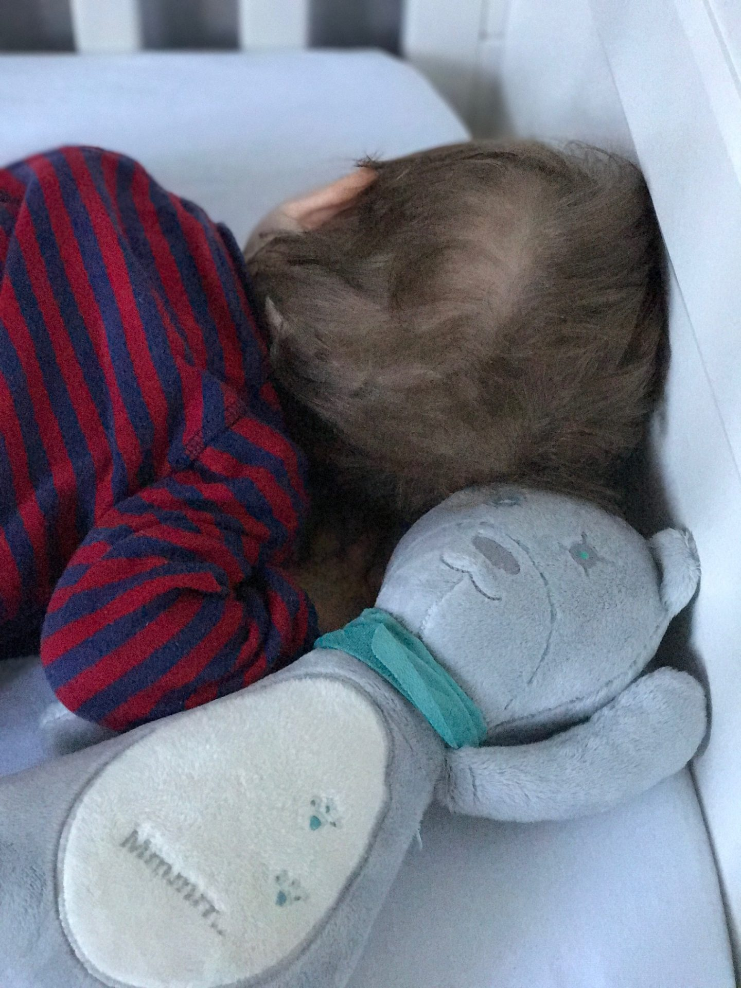 myHummy Teddy Bear Review