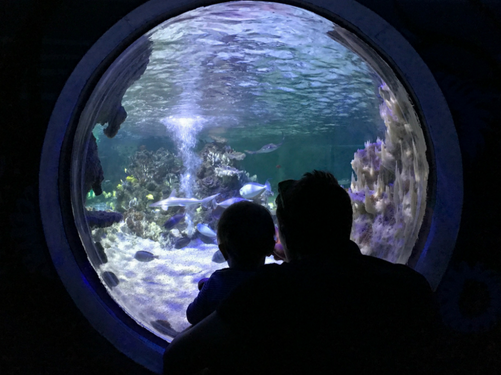 Days Out: Weymouth SEA LIFE Centre