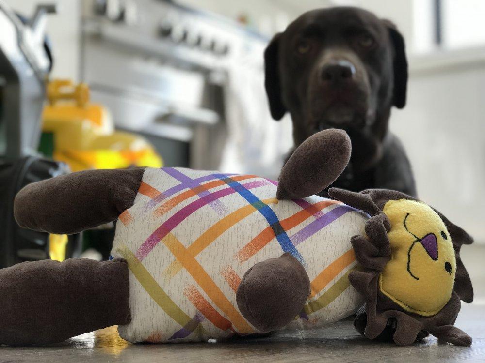 Dream Pet With Petplan