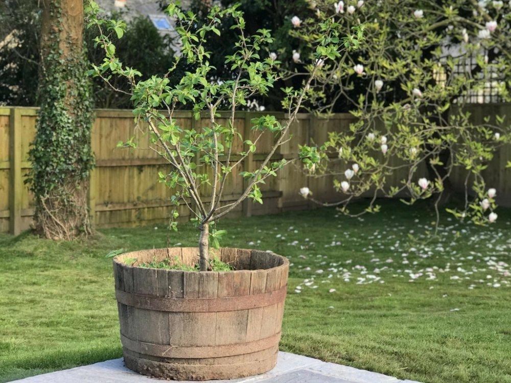 Our Garden Final Reveal