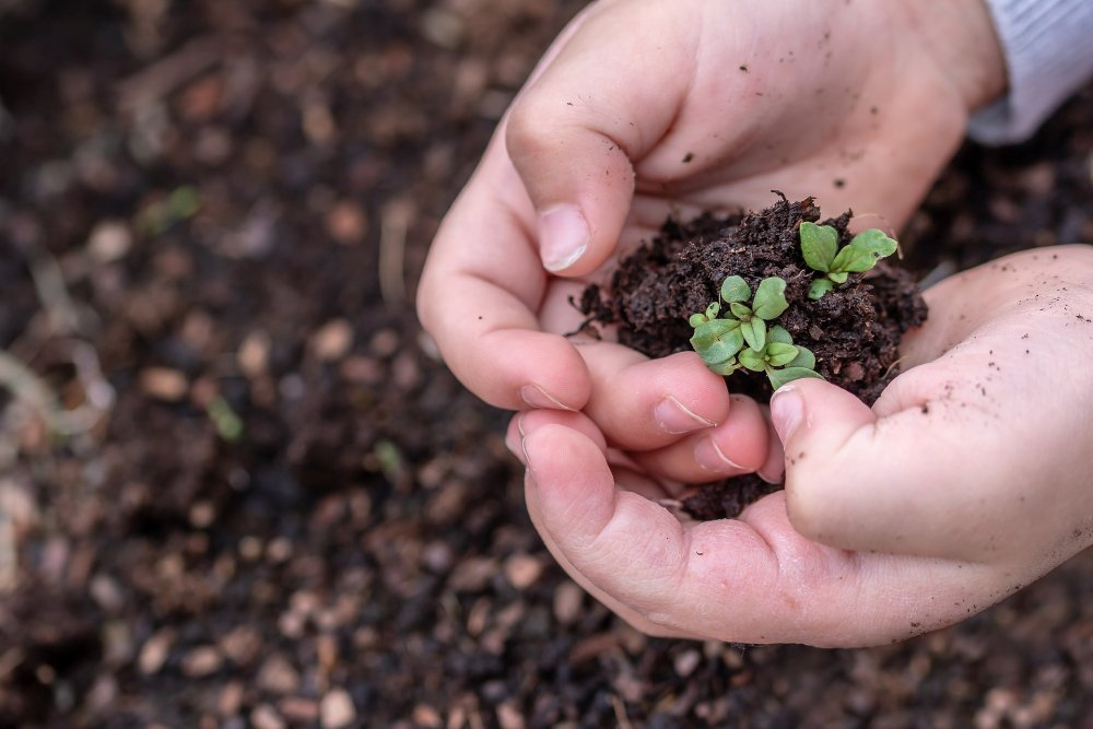 Encourage children in to the garden by getting them to plant seeds themselves.