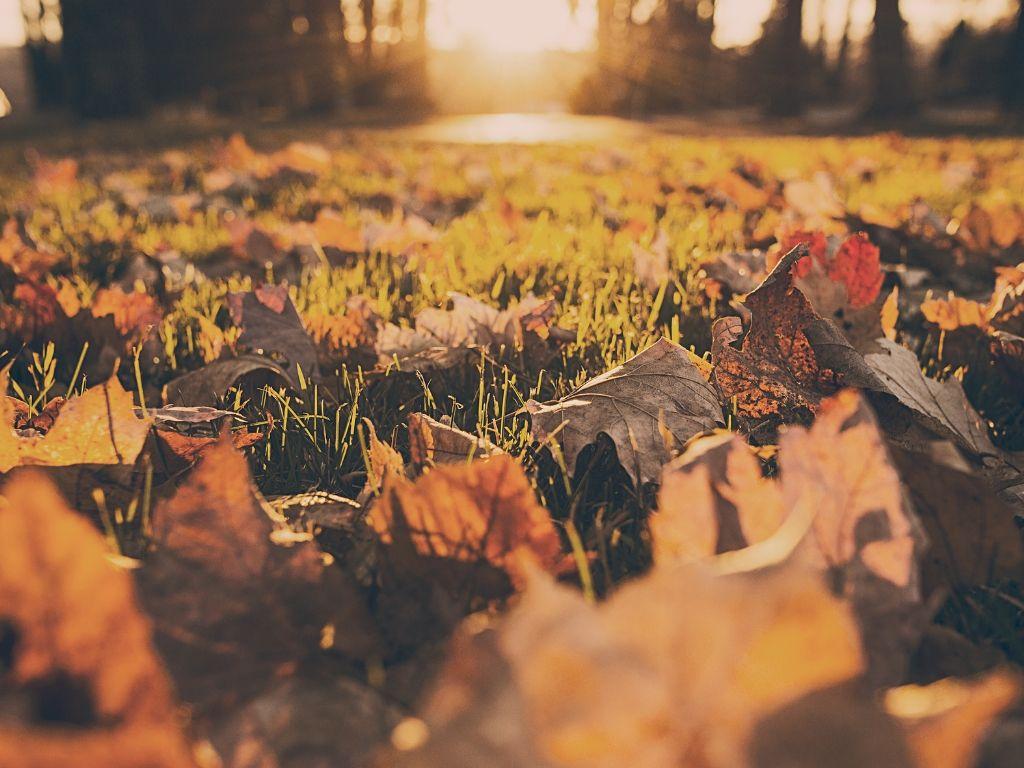 autumn home prep